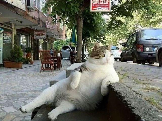 tombili-gato-estambul-2