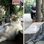 El gato más flojo de Internet ya tiene una estatua en su memoria