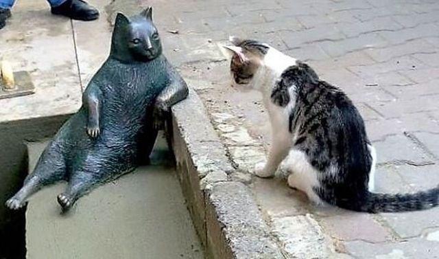 tombili-gato-estambul-5