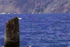 Durante más de 120 años este misterioso tronco ha flotado en vertical