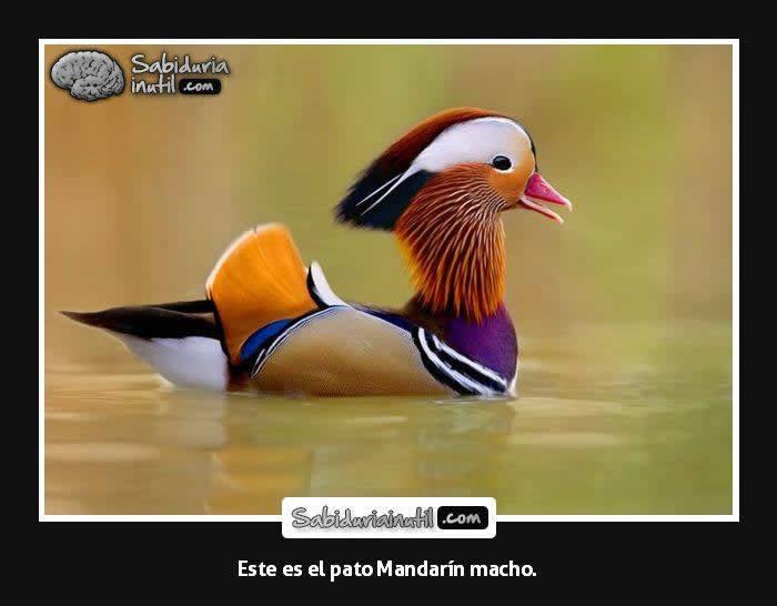 marcianadas_258_1811160959-38