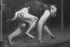 """Un primate paralítico vuelve a caminar con implante de """"Wi-Fi cerebral"""""""