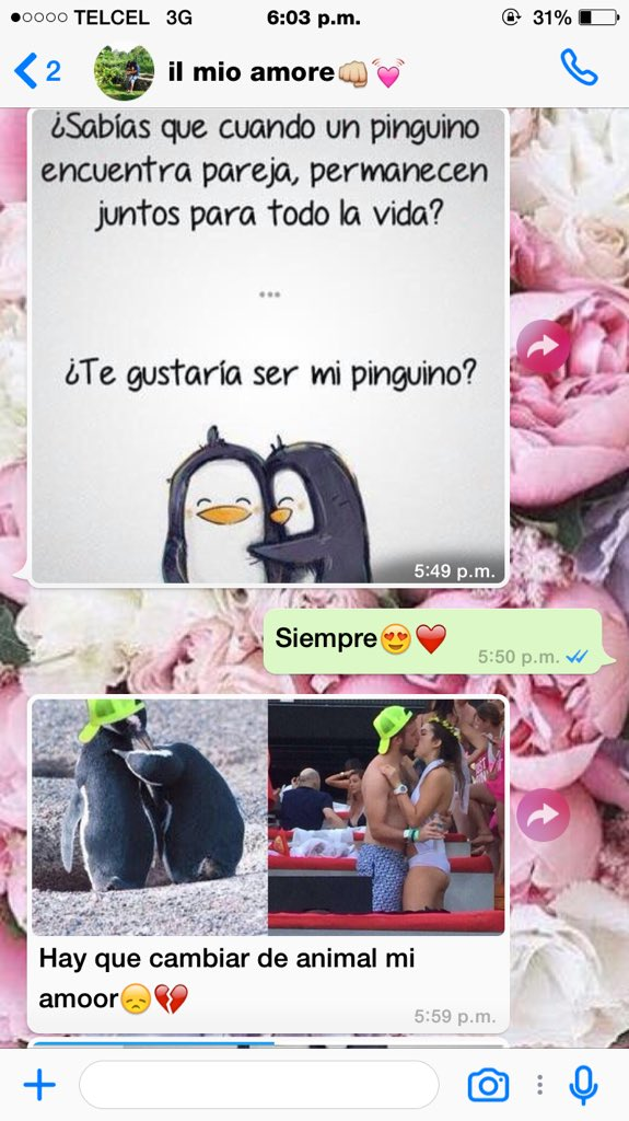 memes-lady-pinguino-2