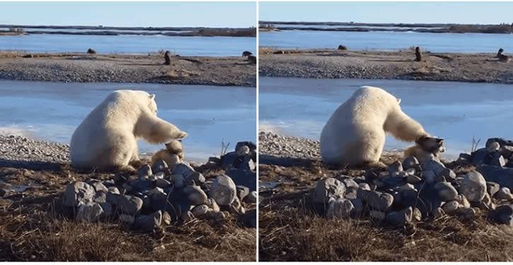 oso-polar-vs-perro
