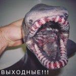 Pescador divulga imágenes de sus extraños descubrimientos