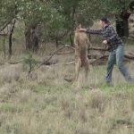 Hombre acierta derechazo a canguro para salvar a su perro
