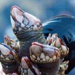 """El """"monstruo marino"""" de Muriwai en Nueva Zelanda"""