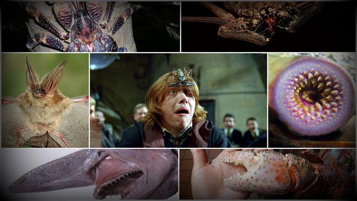 Animales siniestros e inofensivos portada