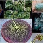 10 fractales alucinantes que puedes encontrar en la naturaleza