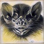 Murciélago en Brasil empezó a alimentarse de sangre humana
