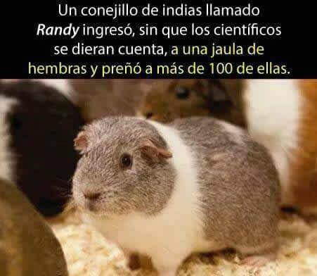 Marcianadas 268 030217000731 (231)
