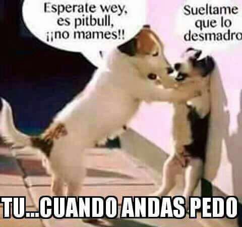 Marcianadas 268 030217000731 (306)