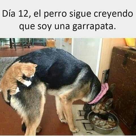 Marcianadas 269 10021700802 (133)