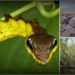 11 grandes camuflajes del reino animal