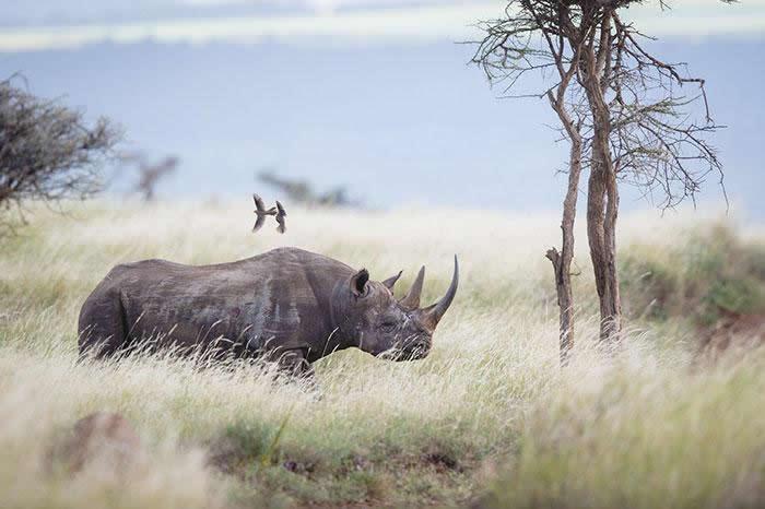 parque nacional Kaziranga rinocerontes (1)