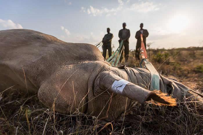 parque nacional Kaziranga rinocerontes (3)