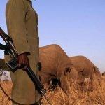 Kaziranga: el parque donde está permitido matar al cazador