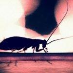 Mujer se queja de dolor de cabeza y descubre cucaracha viviendo en su interior