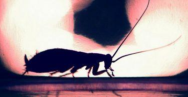 silueta cucaracha