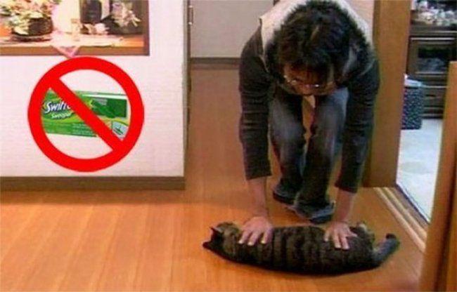 trapear con el gato