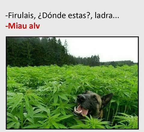 Marcianadas 276 31031700000318 (248)