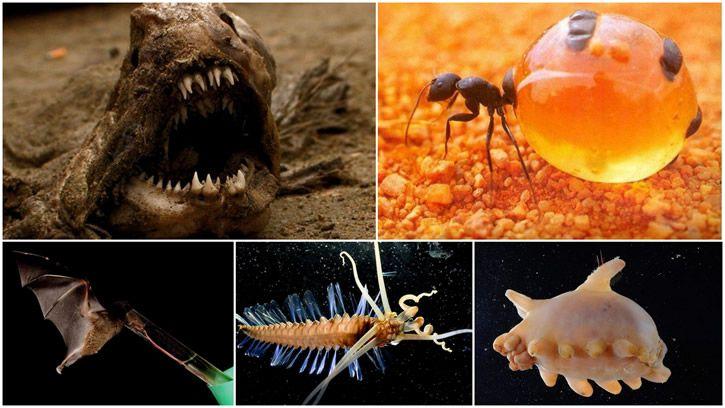 animales reales aterradores portada