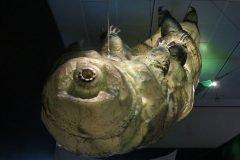 figura tardigrado en un museo