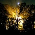 iluminacion amarilla en el bosque