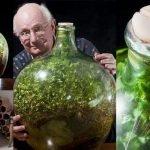 Cultiva jardín en botella que no recibe agua desde 1972