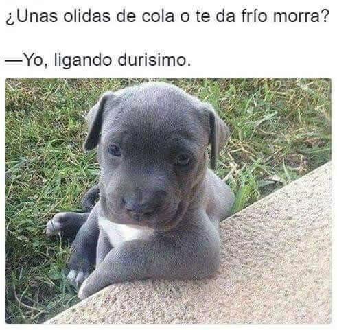 Marcianadas 280 280417000557 (218)