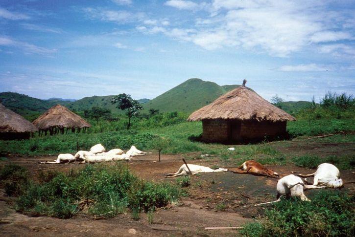 animales muertos aldea de camerun lago nyos
