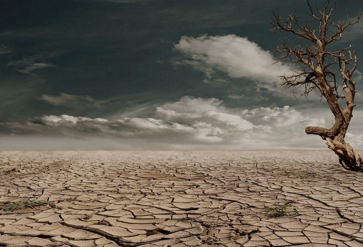 arbol seco en terreno arido