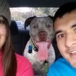 Ex de esta mujer sigue enviando regalos de cumpleaños al perro que adoptaron juntos