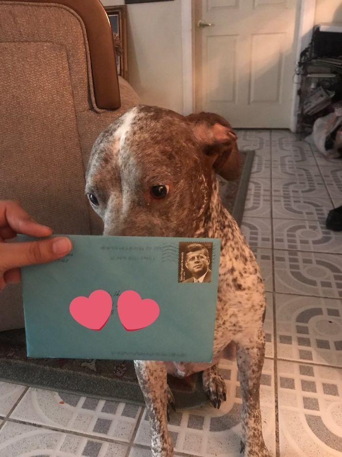 carta al perro de la ex (3)