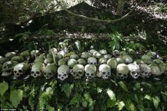 cementerio bajo arbol en trunyan bali (2)
