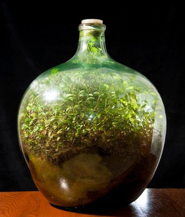 cultivo jardín botella (1)