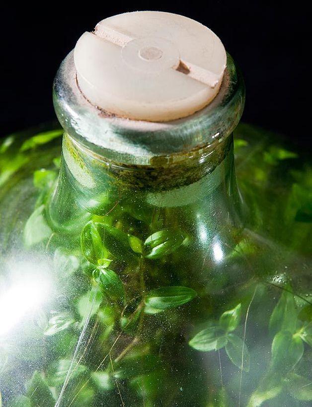 cultivo jardín botella (3)