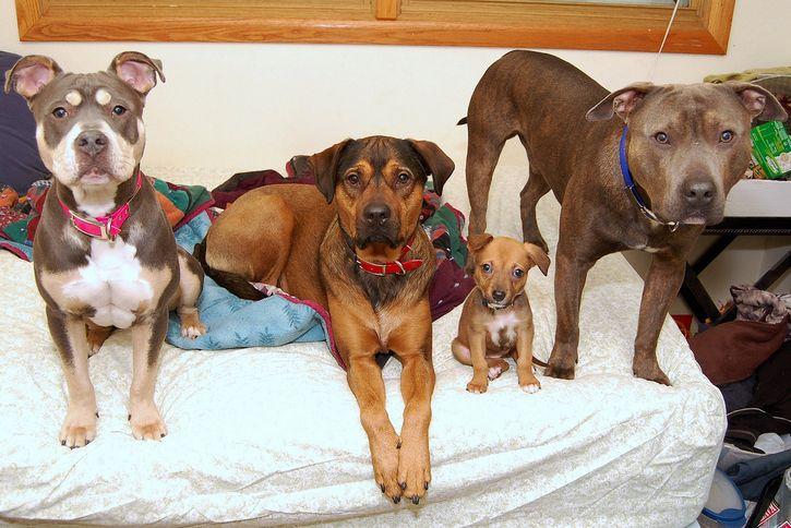 grupo de perros sobre la cama