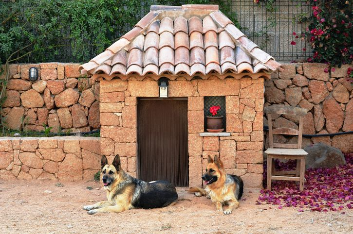 pastor aleman perros en casa
