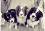 perros tiernos