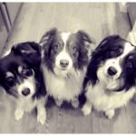 La historia de la diversidad canina revelada