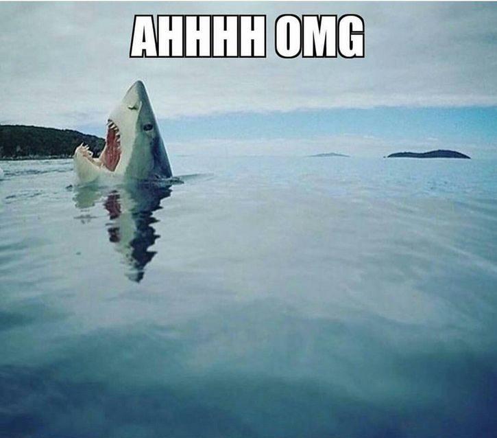 tiburon pisando lego