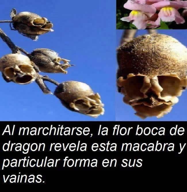 Marcianadas 282 120517001543 (266)
