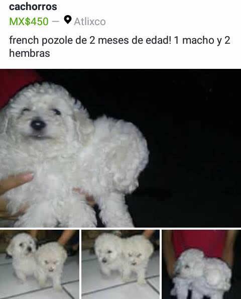 Marcianadas 283 260517000906 (118)
