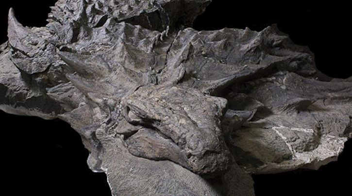 Museo Royal Tyrrell (3)