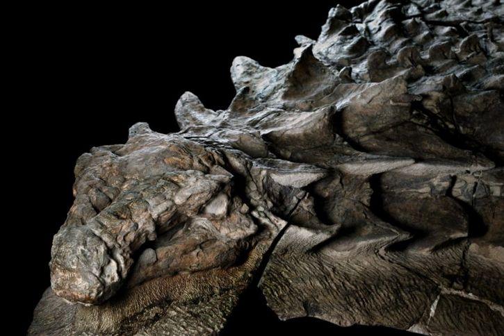 Resultado de imagen de nodosaurus intacto piel alberta tyrrell