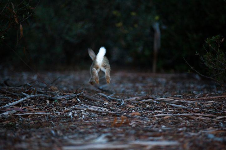 conejo escapando