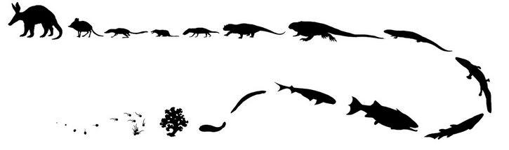 evolucion lineal ilustracion