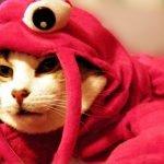 Cómo funciona un gato: 18 datos curiosos