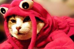 gato disfraz cangrejo